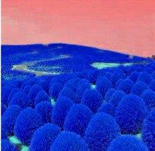 semillas de gramíneas perennes azul 500pcs Hierba zarza ardiente Kochia scoparia semillas rojas de jardín ornamental fácil crecer Bonsai