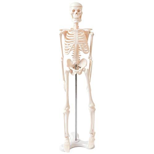 人体模型 45㎝ 【高品質 教材にも使える精巧さ】 オシャレな台座付き 部屋のアクセントにも使える 骨格模型 骨格標本 骨模型 【合計7ヶ所の可動部位あり!!複雑な姿勢も可能】 骨 標本 人体 45cm 1/4 モデル 骨 骨格 模型 骸骨 フィギュア 全身骨格模型 人体模型おもちゃ 【FOREST】