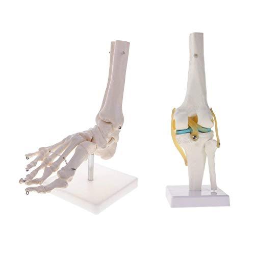 Backbayia Skelett-Dichtung für Knie mit Dichtung für Fußknöchel