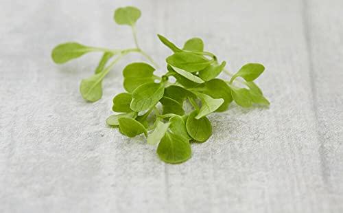 ALYKE Microgreens Salad- Micro Corn Salad - Micro Lambs Lettuce- 1500 Seeds- 1st Class