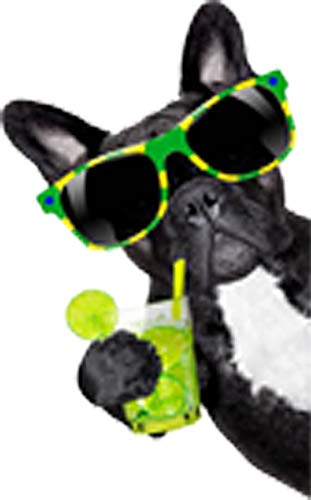 Cool Black French Bulldog with Summer Drink and Sunglasses Vinyl Decal Sticker (4')