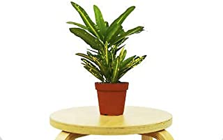Best sunny star croton Reviews