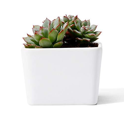 POTEY Mini Succulent Cactus Planter - 2.9 Inch Plant Containers Indoor Bonsai Pot Unglazed with Drain Hole - Square, Matte White