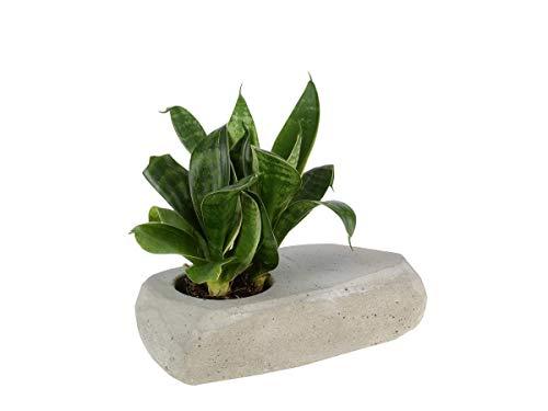 RAUMZUTATEN bloempot beton geometrisch voor kleine planten woestijnplanten cacteen modern Concrete Planter No.1 grijs