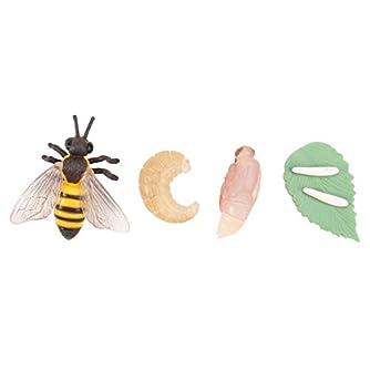 TOYANDONA 昆虫のライフサイクルフィギュアリアルな昆虫フィギュアおもちゃは子供蜂のための動物科学の茎のおもちゃの変態を示しています
