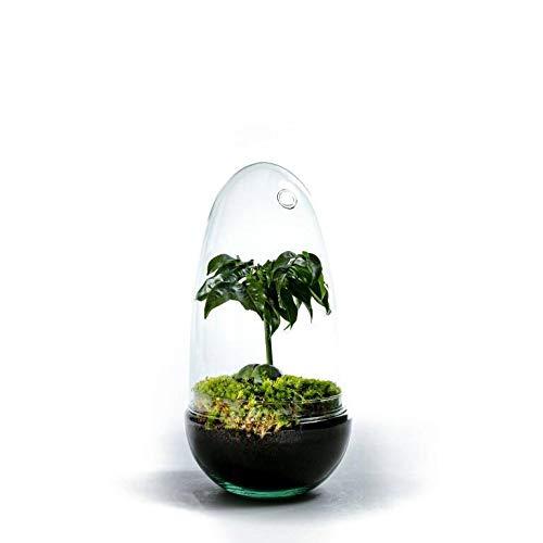 DIY Öko Flaschengarten von Botanicly: Egg Medium – Castanos (Höhe: ca. 25 cm, Breite: ca. 12 cm)
