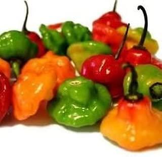 Ajicito, Aji Dulce, Aji Gustoso, Cachucha, Puerto Rican Sweet Pepper 40 Seeds