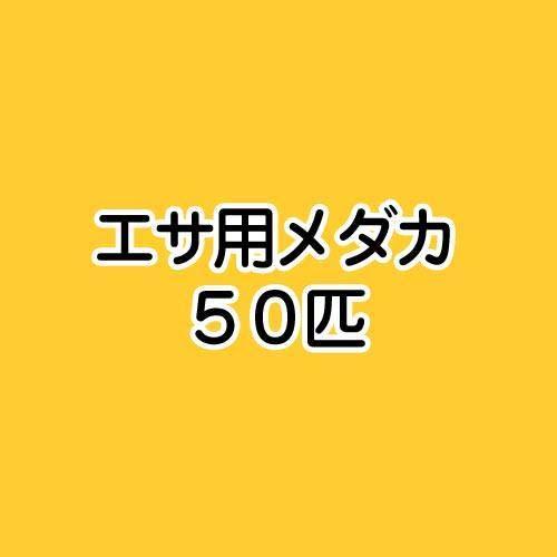 (めだか)生餌 エサ用メダカ/えさ用めだか(50匹) 本州・四国限定[生体]