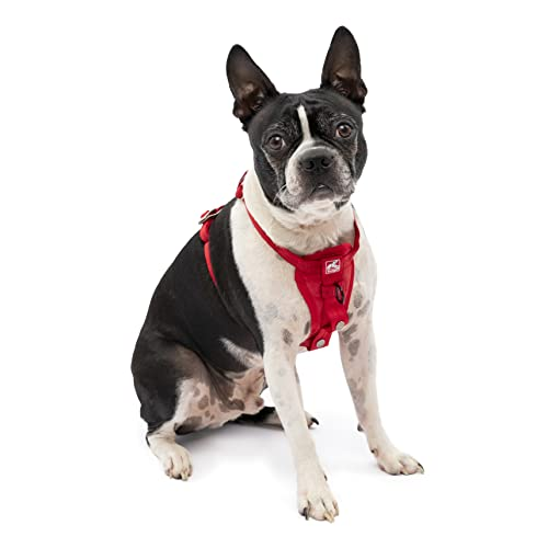 Kurgo Vehicle Safety Harness for Dogs, Universal Seatbelt Attachment via Carabiner Clip, Size: XS - Suitable for Very Small Breeds, Adjustable Fit, Red, Enhanced Strength Tru-Fit Smart Harness, 01175
