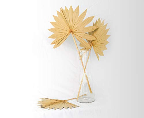 Boho City Blooms Dried Palm Leaves | 5 pcs 15-20in Premium Natural Dried Palm Fans | Boho Decor | Neutral Home House Decor | Wedding Decor | Leaves + Flower + Leaf Decor | Dried Flowers for Vase