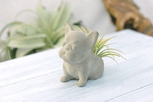 Concrete Small French Bulldog Sit Up Air Plant Planter Small | Wedding Favors | Home Office Decor | Modern Planter