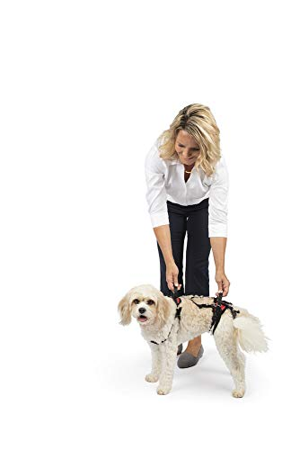 PetSafe CareLift Support Harness - Full Body Lifting Aid with Handle - Great for Pet Mobility and Older Dogs - Comfortable, Breathable Material - Easy to Adjust - Small