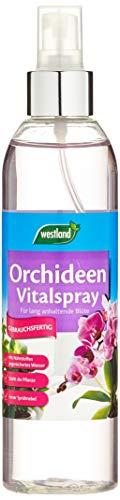 Westland Vitalspray 733698, Blattpflege für Orchideen, Transparent, 250 ml