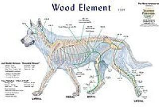 Canine 5 Element Meridian Chart Set of 4 Dog (Lake Forest Anatomicals Vet Models)|Lake Forest Anatomicals Vet Models
