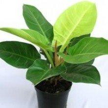 Best plants guru