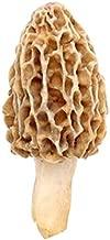 Morel Mushrooms Spores 40 Grams in Sawdust Bag - Morchella Esculenta, True Morel Mushroom Growing Kit, Fresh Morel Mushroom Spores, Morel Mushroom Kit in 5 Gallons of Filtered