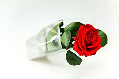 Rosen-Te-Amo – Konservierte echte rote Rose: Unvergängliche Blume mit Grußkarte zum Herunterladen; Infinity Rosen - Deko und Geschenk in neue verstärkte Verpackung - 4