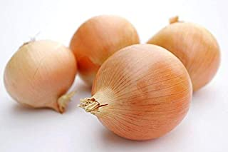 Riverside Sweet Spanish Onion Seeds, 300+ Premium Heirloom Seeds, Fantastic Onion to add to Your Home Garden! (Isla's Garden Seeds), Non GMO Organic, 90-95% Germination Rates, Highest Quality Seeds
