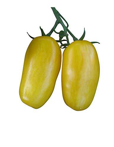 Tomate - Jambes de banane - 10 graines - Tomate de banane