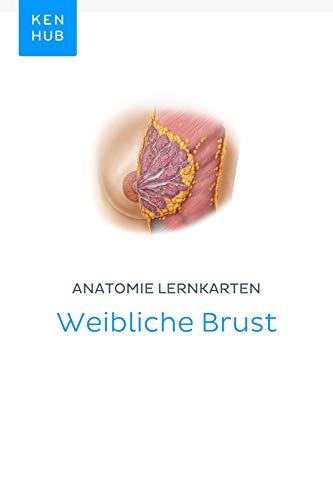 weibliche brust anatomie