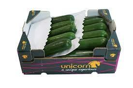 Zucchini frisch im 5 kg Karton aus Spanien