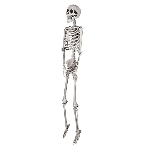 AW 5ft Full Body Skeleton Props with Movable Joints for Halloween Party Decoration