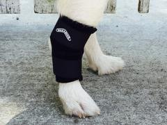 Walkabout Harnesses Hock wrap for Dogs and Cats (Small 2