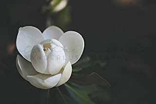 Best southern magnolia photography Reviews