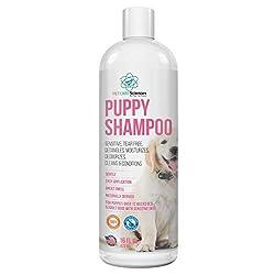 Bestes Shampoo für Chihuahua-Hunde aller Art