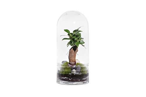 Green Factory – Jungle Rocket Medium – Composición vegetal viva y autónoma...