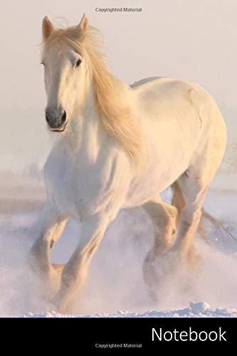 Notebook: Cavalli taccuino | agenda | quaderno delle annotazioni | diario | libro di scrittura | carnet | zibaldone - 6 x 9 (15,24 x 22,86 cm), 110 pagine, superficie lucida.