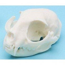 ESP Modell Cat Skull Kunststoff (ZKA-010-C)