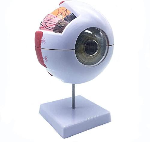 MWKLW Bildung Augenvergrößerung Anatomiemodell sechsmal Die menschliche Anatomie des Auges Wird zum Unterrichten der medizinischen Visualisierung verwendet, auf der Basis 17 * 15 * 27 cm