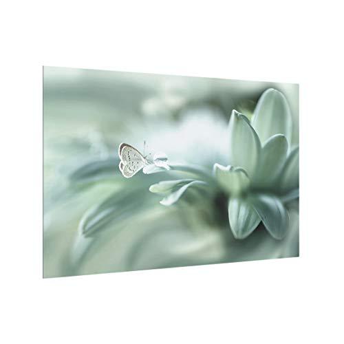 Bilderwelten Pannello Paraschizzi Cucina Vetro Farfalla E Gocce di Rugiada in Verde, 40x60 cm