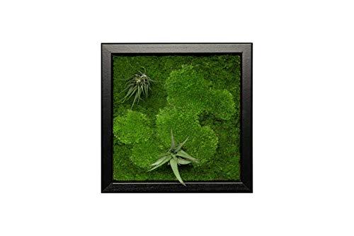 Pflanzenbild kaufen Moosbild mit lebenden Pflanzen Wandbild Moos Wanddeko Poster quadratisch in versch. Maßen
