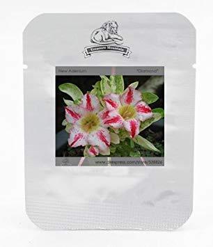 Potseed Große Förderung! Red Freesie Samen Freesie Blumentopf Garten Terrasse Perennial Blumensamen 100 Stücke/Los, 6J5ZFC