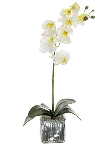 Home Decor 4 U Orquídea artificial, orquídea polilla, planta artificial, orquídea con maceta de cromo cubo, centro de flores artificiales, orquídeas falsas, plantas falsas, flores artificiales