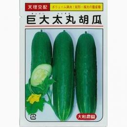 きゅうり 種 【 巨大太丸 】 種子 小袋(約10粒)