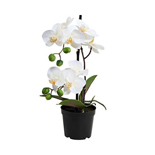 Butlers - Orchideen in Weiß, Größe Breite 10 x Tiefe 10 x Höhe 35 cm