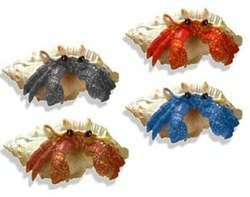 Blue Ribbon Hermit Crab Assortment Ornaments by Mojetto