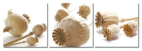 Huis en decoratie muurschildering set van 3 klaprozen capsule stijl klaprozen zaden capsule fotodruk afbeeldingen op houtvezelplaat eenvoudige installatie