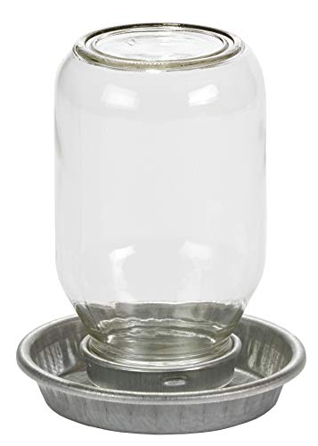 Little Giant Glass Jar Chick Waterer Mason Jar Baby Chick Waterer, 1 Quart (Item No. MJ9826)
