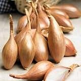 100 semillas chalota'Zebrune' - de la herencia chalota de Francia