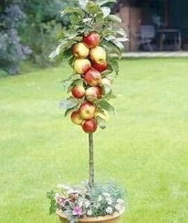 Best bonsai apple tree price Reviews