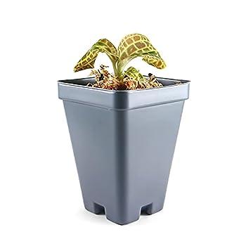 Best jewel orchid Reviews