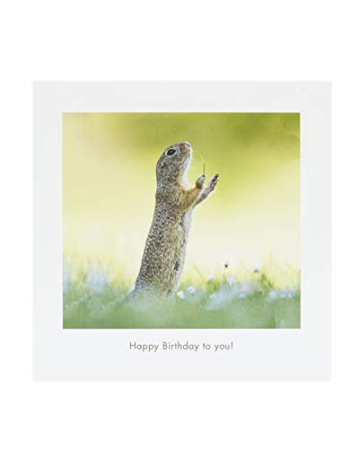 Comedy Wildlife Photography Awards – Lustige Tier-Geburtstagskarte – Ideale Geburtstagskarte für Sie, Geburtstagskarte für Ihn, humorvolle Geburtstagskarte – Happy Birthday