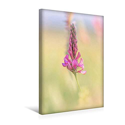 Premium Textil-Leinwand 30 cm x 45 cm hoch Saat-Esparsette in Pastell