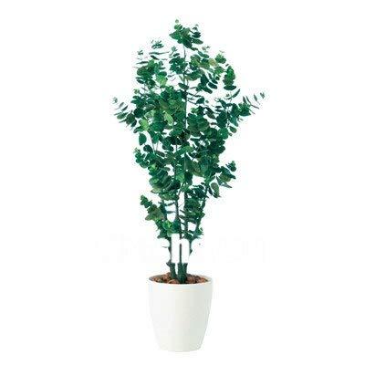 Ferry Heißer Bule Eukalyptusbaum Bonsai Pflanzen, 50 PC Zier-Baum Exotische Natur Wachstum Home Garten einfach wachsen: 1