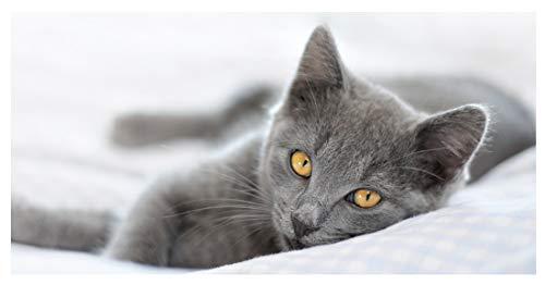 """insidehome Infrarotheizung Bildheizung PREMIUM, rahmenlos mit Bild, 900 Watt, 120x60x1,5 cm, Motiv\""""Katze\"""""""