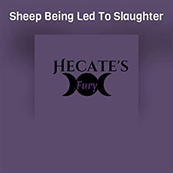 Sheep Being Led To Slaughter